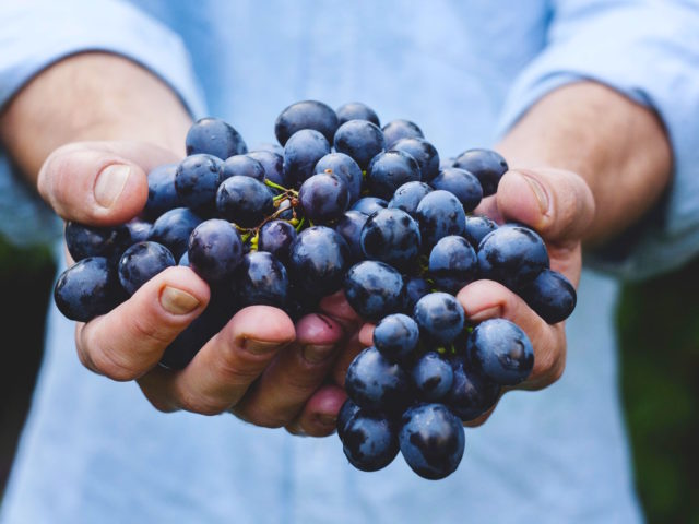 https://petromlogistics.com/wp-content/uploads/2019/03/grapes-690230-640x480.jpg